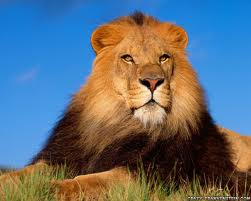 as brave a s alion